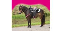 Pony western